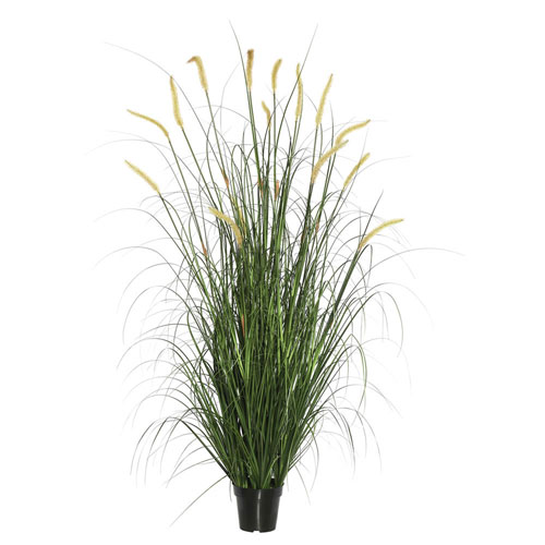 24 In. Green Foxtail Grass in Pot