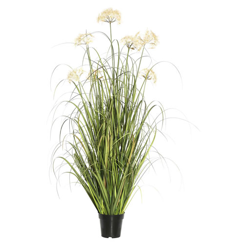 Dandelion Grass in Pot