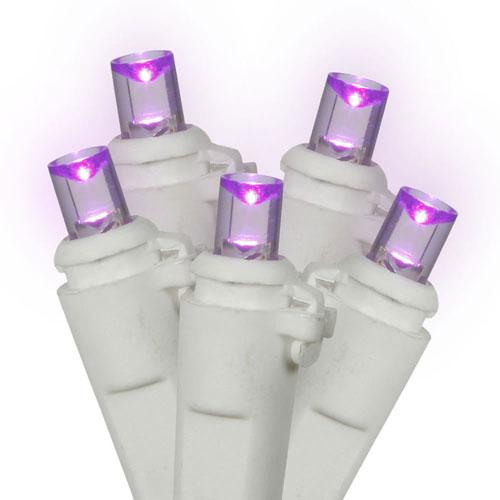 Purple 25 Foot LED Light Set with 50 Lights