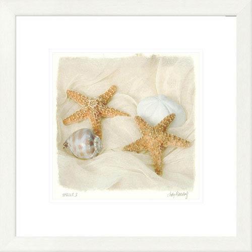 Global Gallery Shells III By Judy Mandolf, 20 X 20-Inch Wall Art