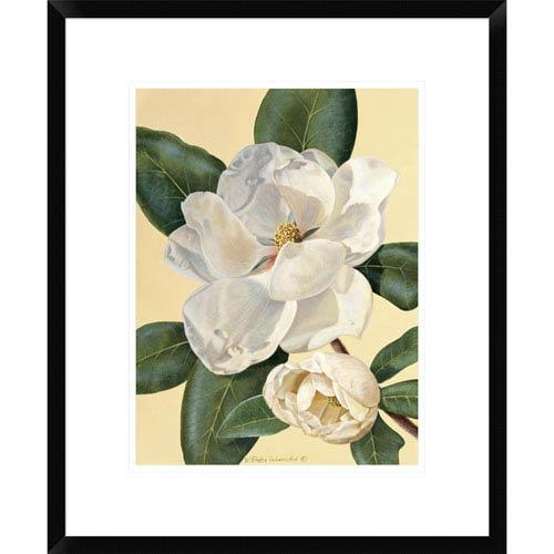 Global Gallery Morning Magnolia By Waltraud Fuchs Von Schwarzbek, 22 X 18-Inch Wall Art