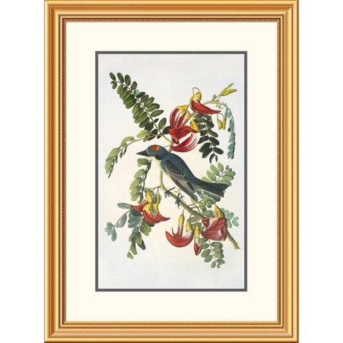 Global Gallery Gray Tyrant By John James Audubon, 32 X 23-Inch Wall Art