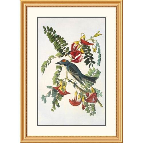 Global Gallery Gray Tyrant By John James Audubon, 40 X 28-Inch Wall Art