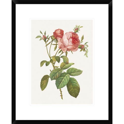 Global Gallery Rosa Centrifolia Foliacea By Pierre Redoute, 22 X 18-Inch Wall Art