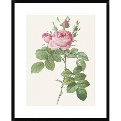 Global Gallery Rosa Bifera Officinalis By Pierre Redoute, 30 X 24-Inch Wall Art
