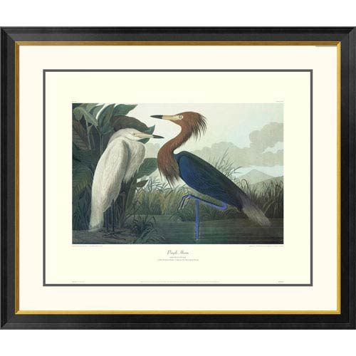 Global Gallery Purple Heron By John James Audubon, 34 X 40-Inch Wall Art With Decorative Border