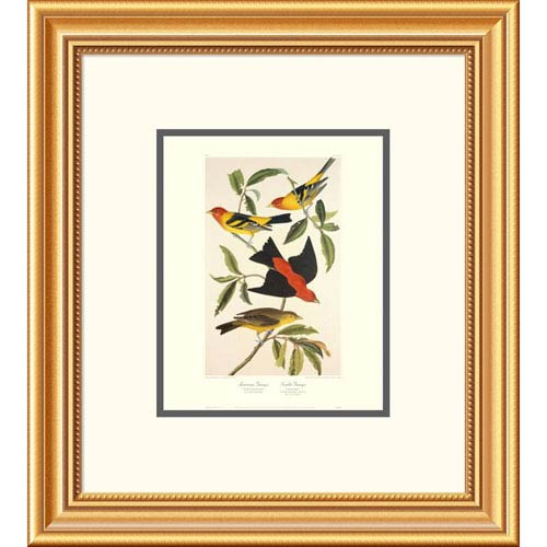 Global Gallery Louisiana Tanager, Scarlet Tanager By John James Audubon, 20 X 18-Inch Wall Art With Decorative Border