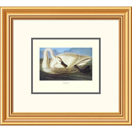 Global Gallery Trumpeter Swan By John James Audubon, 18 X 20-Inch Wall Art With Decorative Border