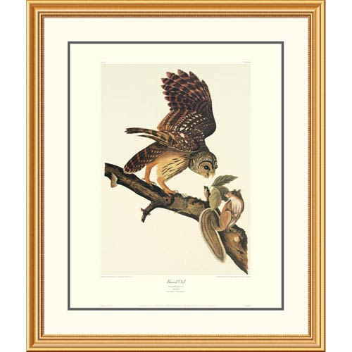 Global Gallery Barred Owl By John James Audubon, 40 X 34-Inch Wall Art With Decorative Border