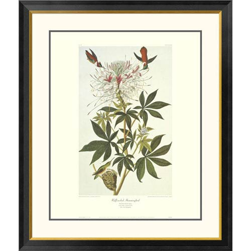 Global Gallery Ruff Necked Hummingbird By John James Audubon, 40 X 34-Inch Wall Art With Decorative Border