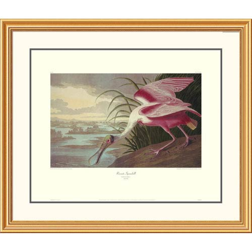 Global Gallery Roseate Spoonbill By John James Audubon, 34 X 40-Inch Wall Art With Decorative Border