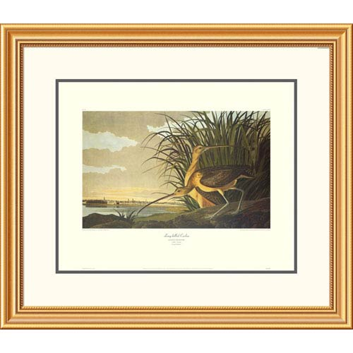 Global Gallery Long Billed Curlew By John James Audubon, 26 X 30-Inch Wall Art With Decorative Border