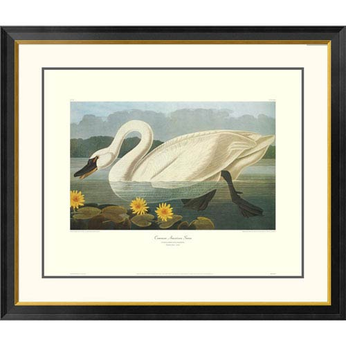 Global Gallery Common American Swan By John James Audubon, 34 X 40-Inch Wall Art With Decorative Border