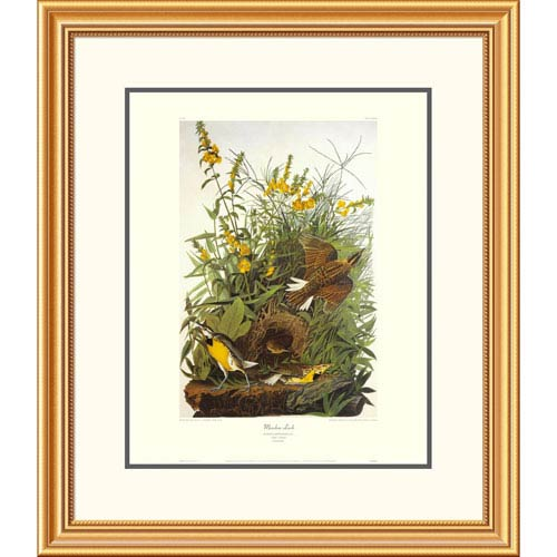 Global Gallery Meadow Lark By John James Audubon, 30 X 26-Inch Wall Art With Decorative Border