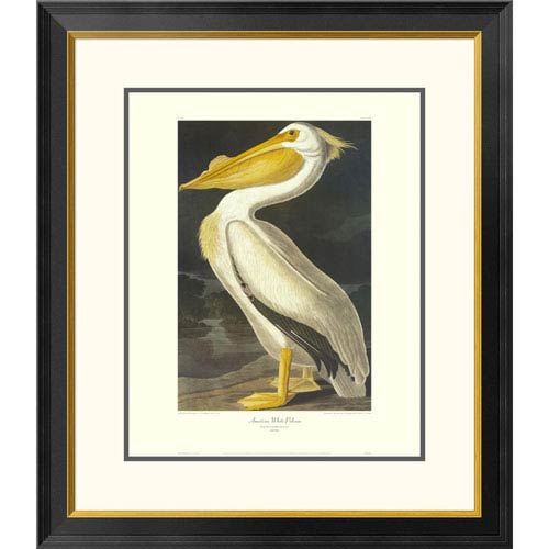 Global Gallery American White Pelican By John James Audubon, 30 X 26-Inch Wall Art With Decorative Border