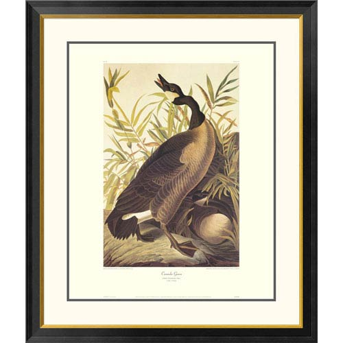 Global Gallery Canada Goose By John James Audubon, 40 X 34-Inch Wall Art With Decorative Border