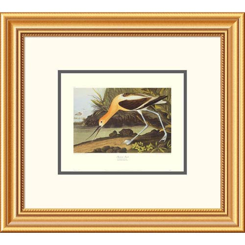 Global Gallery American Avocet By John James Audubon, 18 X 20-Inch Wall Art With Decorative Border