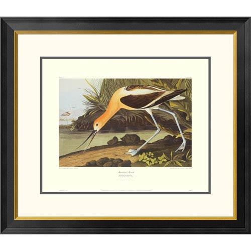 Global Gallery American Avocet By John James Audubon, 26 X 30-Inch Wall Art With Decorative Border