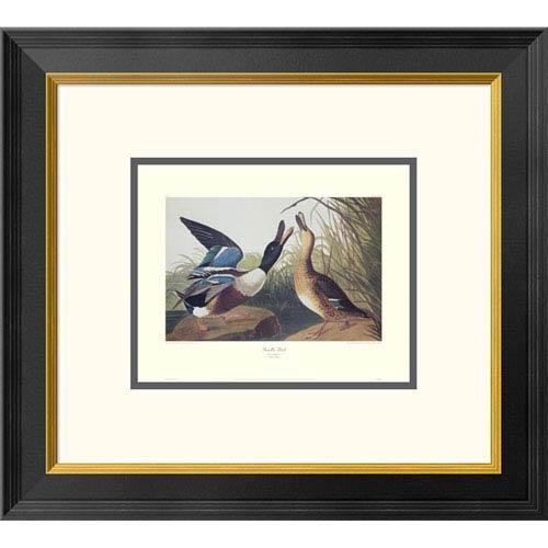 Global Gallery Shoveller Duck By John James Audubon, 18 X 20-Inch Wall Art With Decorative Border