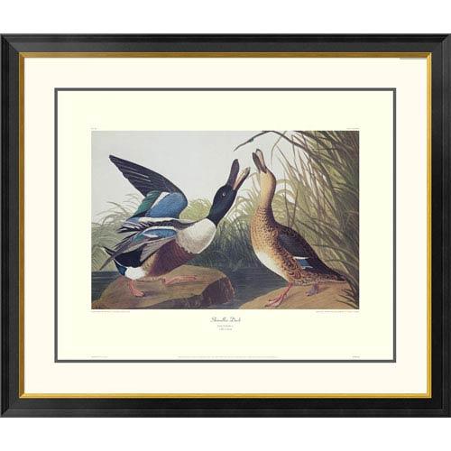 Global Gallery Shoveller Duck By John James Audubon, 34 X 40-Inch Wall Art With Decorative Border