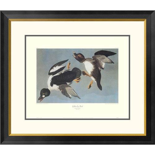 Global Gallery Golden Eye Duck By John James Audubon, 26 X 30-Inch Wall Art With Decorative Border