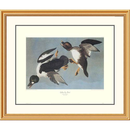 Global Gallery Golden Eye Duck By John James Audubon, 34 X 40-Inch Wall Art With Decorative Border