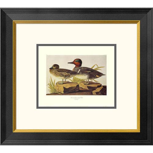 Global Gallery American Green Winged Teal By John James Audubon, 18 X 20-Inch Wall Art With Decorative Border