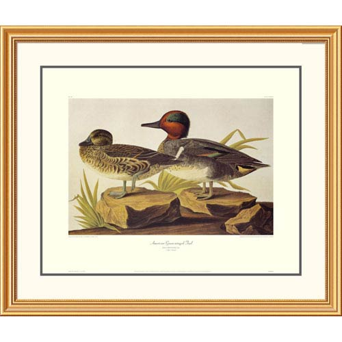 Global Gallery American Green Winged Teal By John James Audubon, 34 X 40-Inch Wall Art With Decorative Border