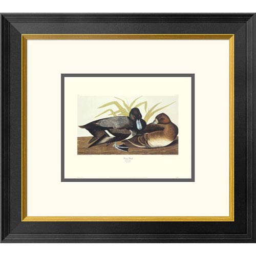 Global Gallery Scaup Duck By John James Audubon, 18 X 20-Inch Wall Art With Decorative Border