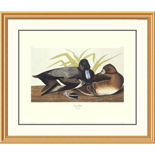 Global Gallery Scaup Duck By John James Audubon, 34 X 40-Inch Wall Art With Decorative Border