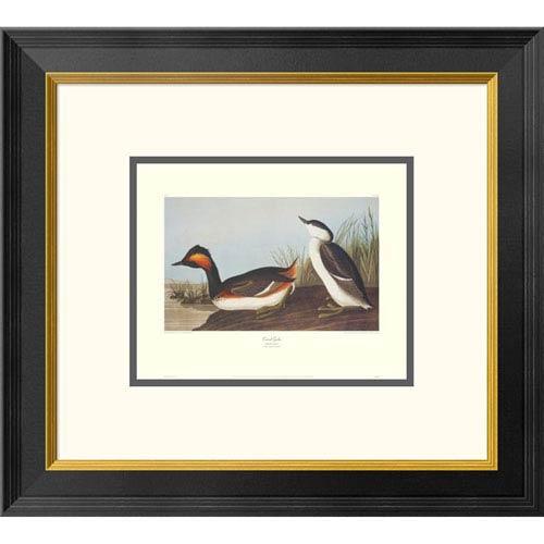 Global Gallery Eared Grebe By John James Audubon, 18 X 20-Inch Wall Art With Decorative Border