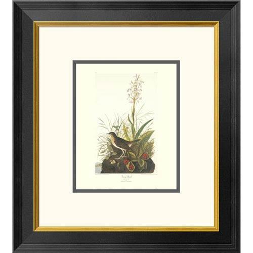 Global Gallery Tawny Thrush By John James Audubon, 20 X 18-Inch Wall Art With Decorative Border