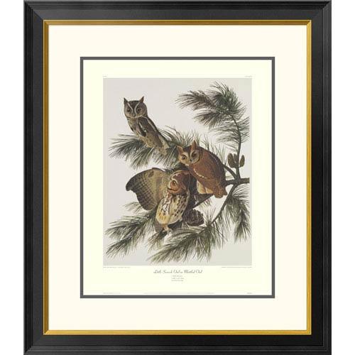 Global Gallery Little Screech Owl Or Mottled Owl By John James Audubon, 30 X 26-Inch Wall Art With Decorative Border