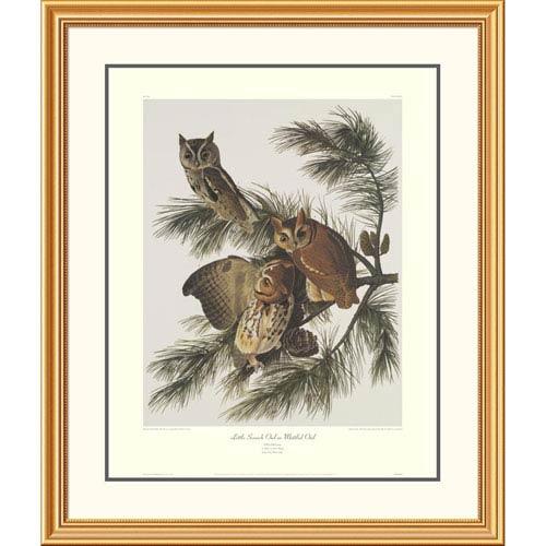 Global Gallery Little Screech Owl Or Mottled Owl By John James Audubon, 40 X 34-Inch Wall Art With Decorative Border