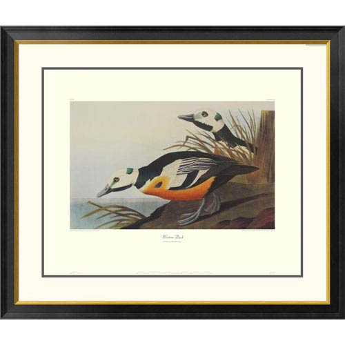 Global Gallery Western Duck By John James Audubon, 34 X 40-Inch Wall Art With Decorative Border