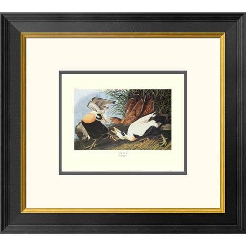 Global Gallery Eider Duck By John James Audubon, 18 X 20-Inch Wall Art With Decorative Border
