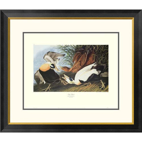 Global Gallery Eider Duck By John James Audubon, 26 X 30-Inch Wall Art With Decorative Border