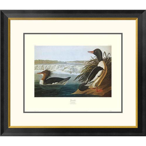 Global Gallery Goosander By John James Audubon, 26 X 30-Inch Wall Art With Decorative Border