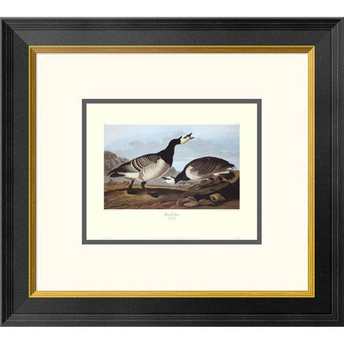 Global Gallery Barnacle Goose By John James Audubon, 18 X 20-Inch Wall Art With Decorative Border