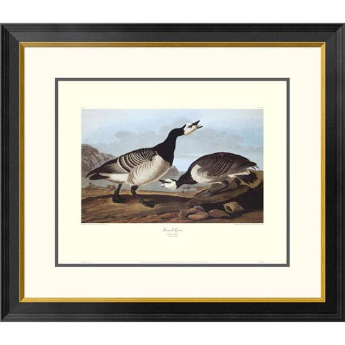 Global Gallery Barnacle Goose By John James Audubon, 26 X 30-Inch Wall Art With Decorative Border