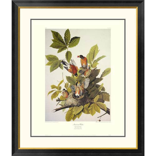 Global Gallery American Robin By John James Audubon, 40 X 34-Inch Wall Art With Decorative Border