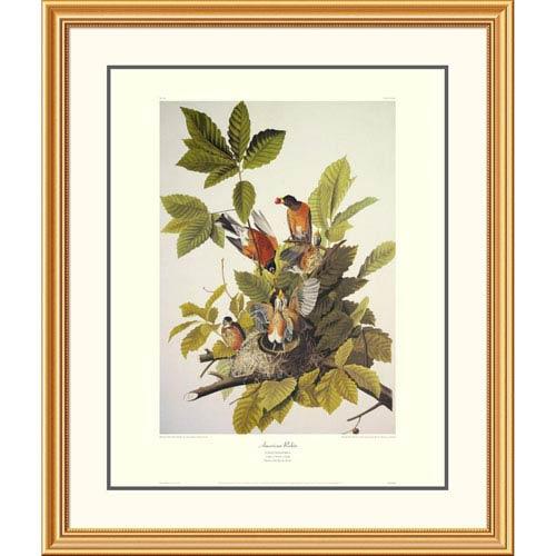 Global Gallery American Robin By John James Audubon, 40 X 34-Inch Wall Art With Decorative Border