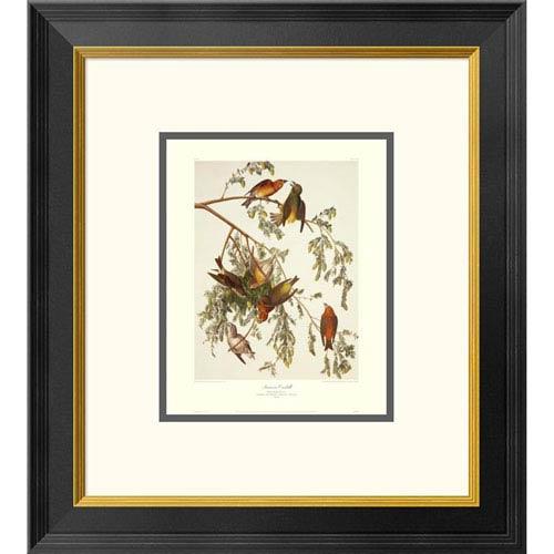 Global Gallery American Crossbill By John James Audubon, 20 X 18-Inch Wall Art With Decorative Border