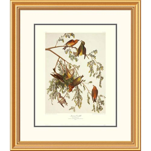 Global Gallery American Crossbill By John James Audubon, 30 X 26-Inch Wall Art With Decorative Border