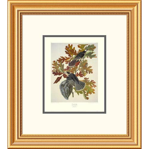 Global Gallery Canada Jay By John James Audubon, 20 X 18-Inch Wall Art With Decorative Border