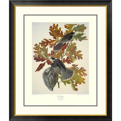Global Gallery Canada Jay By John James Audubon, 40 X 34-Inch Wall Art With Decorative Border