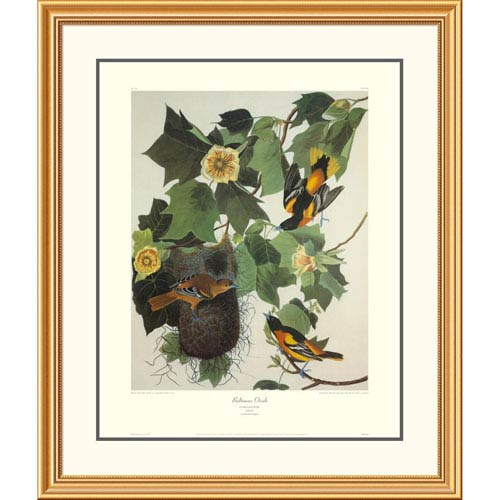 Global Gallery Baltimore Oriole By John James Audubon, 40 X 34-Inch Wall Art With Decorative Border