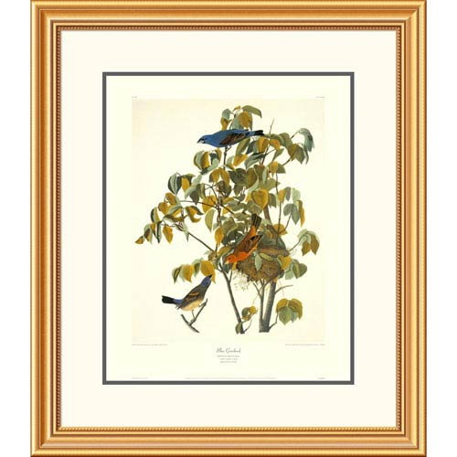 Global Gallery Blue Grosbeak By John James Audubon, 30 X 26-Inch Wall Art With Decorative Border