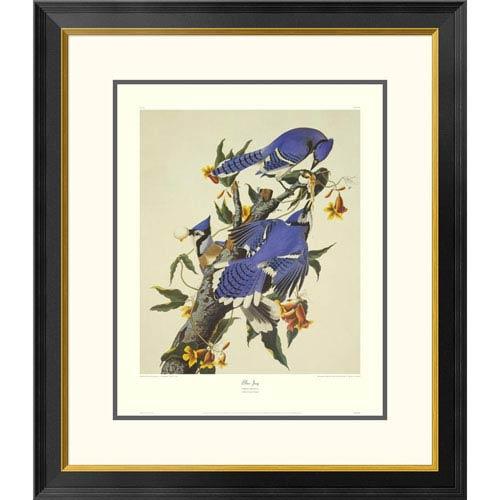Global Gallery Blue Jay By John James Audubon, 30 X 26-Inch Wall Art With Decorative Border