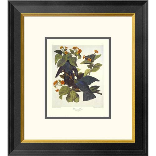 Global Gallery White Crowned Pigeon By John James Audubon, 20 X 18-Inch Wall Art With Decorative Border